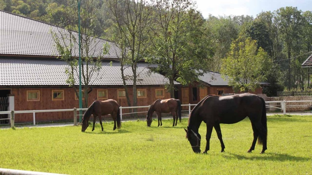 cheval-cap-paddock